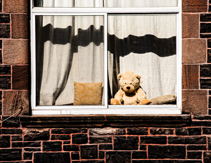 Teddy bear in a window
