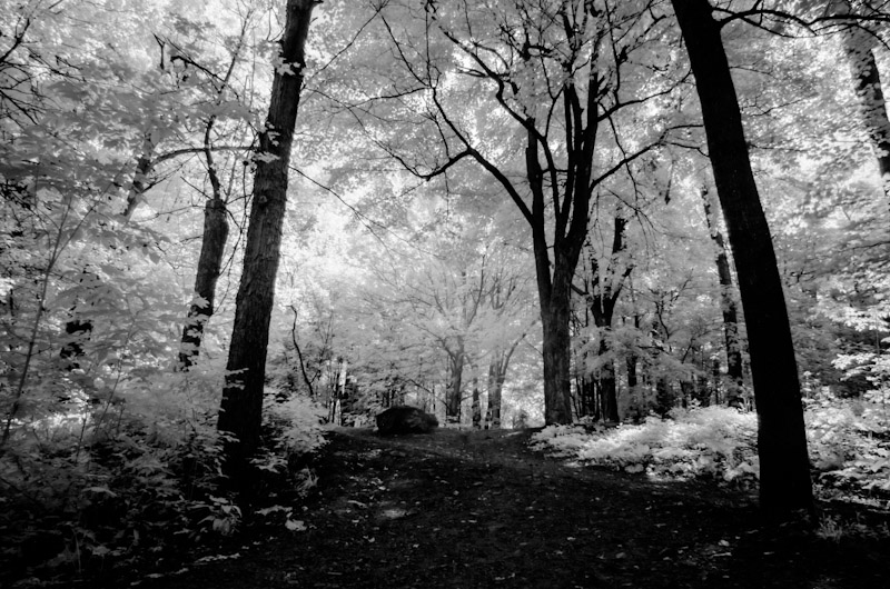 Infrared of parc Mount Royal