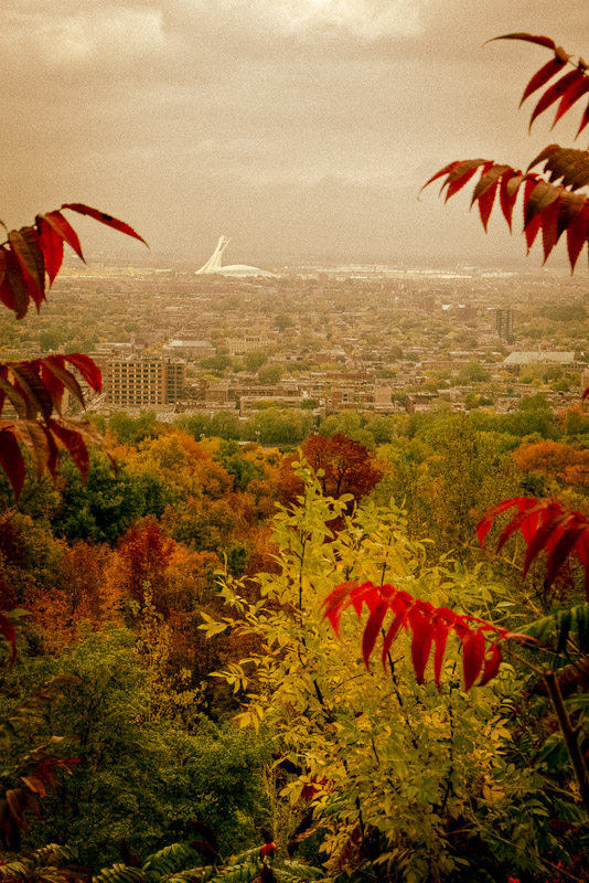 Olympic Stadium from Mount Royal