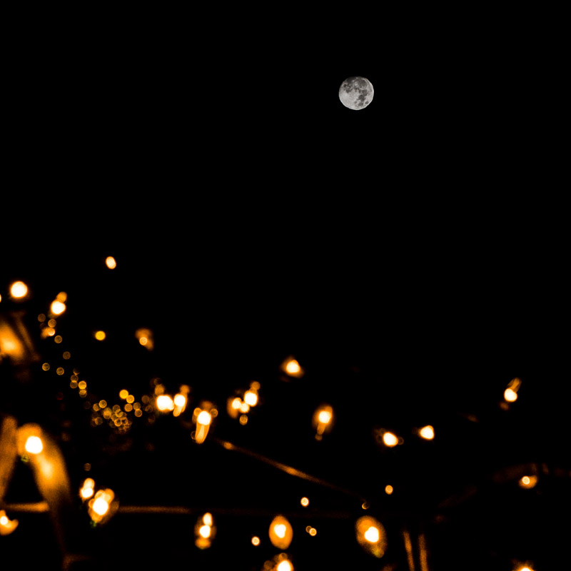 Christmas lights under the moon