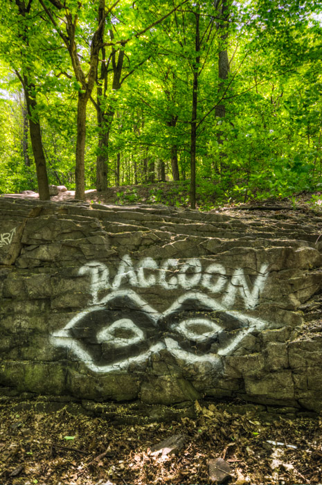 Raccoon graffiti tag