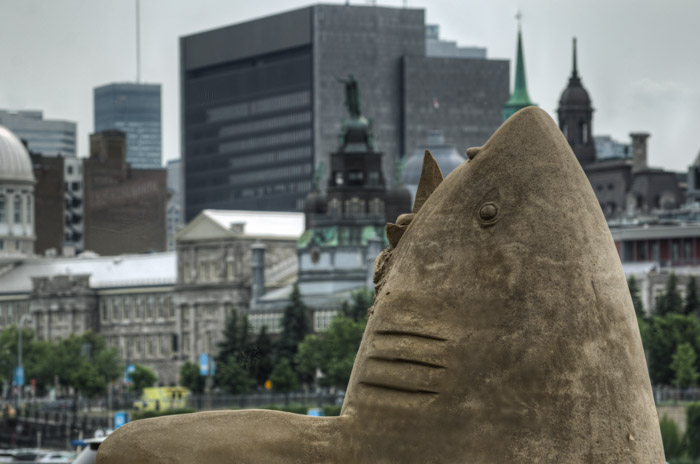 Another shark looking for City Hall
