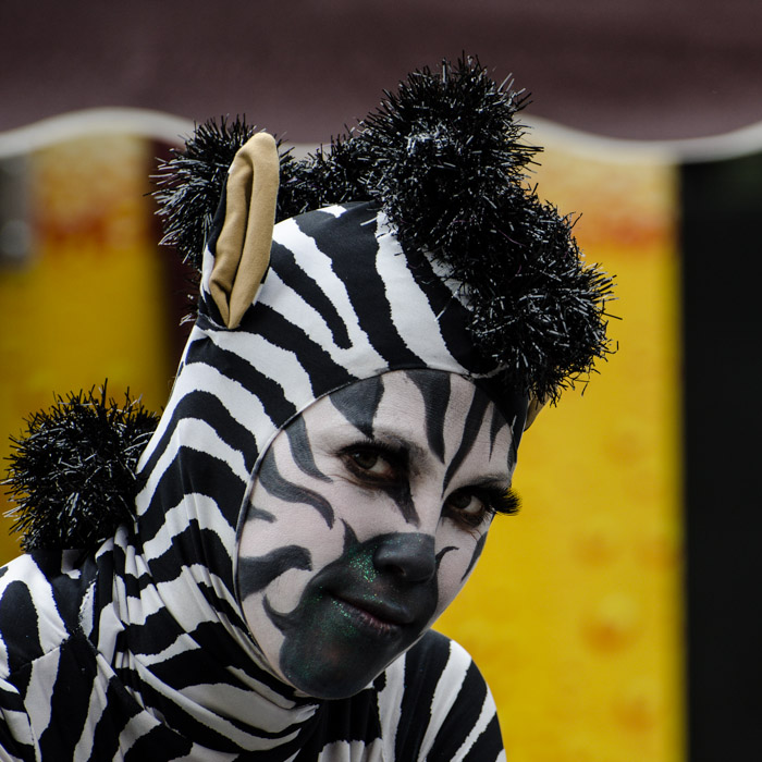 Zebra street entertainer