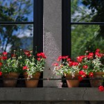Colorful window ledge