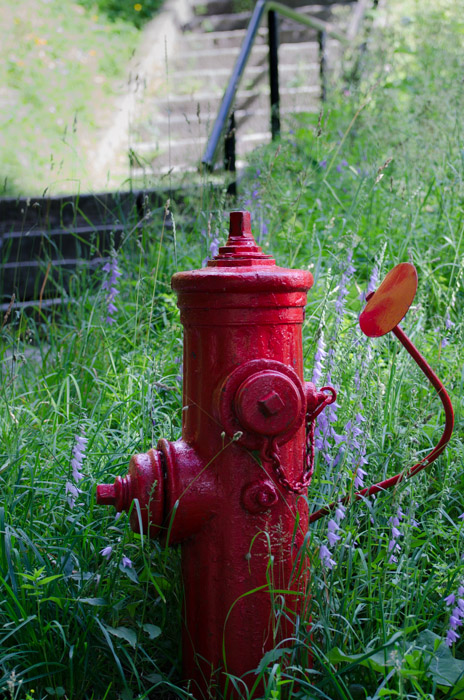 Fire Hydrant in the wild