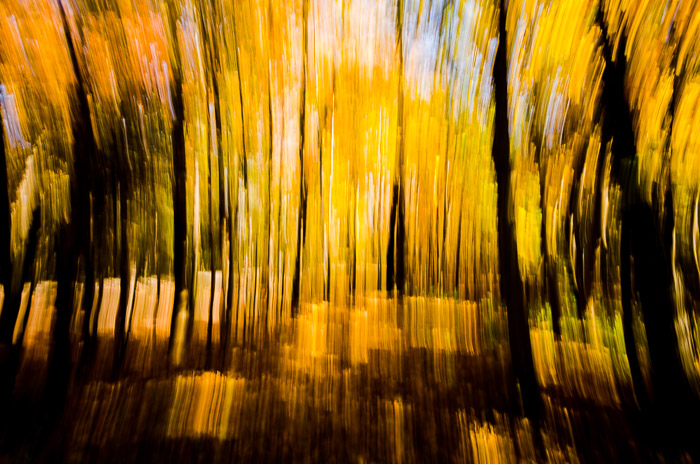 Autumn color abstract