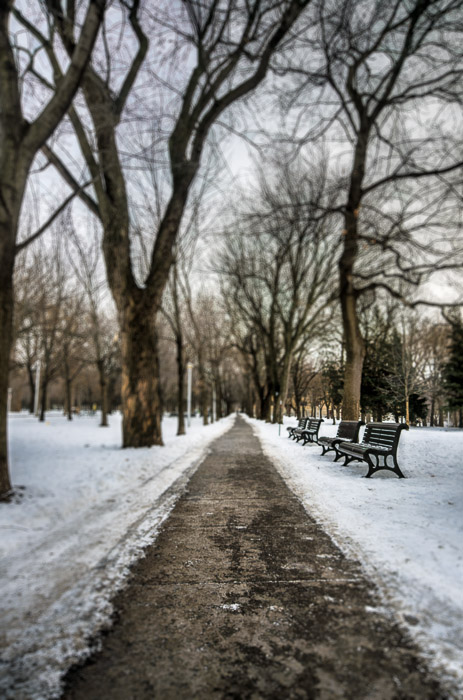 Benches at Parc Lafontaine