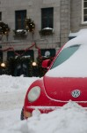 Red Beetle in the snow