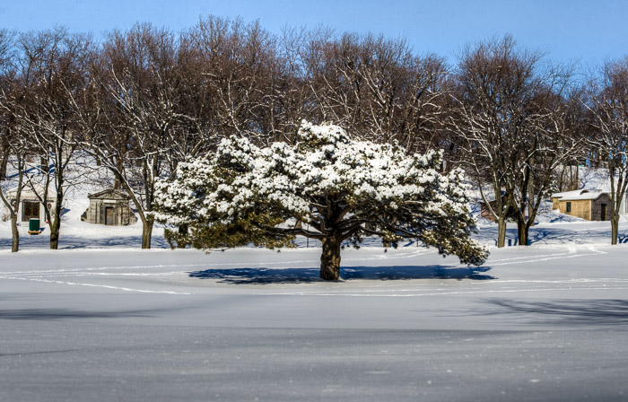 A tree at Notre Dame des Neiges cemetery