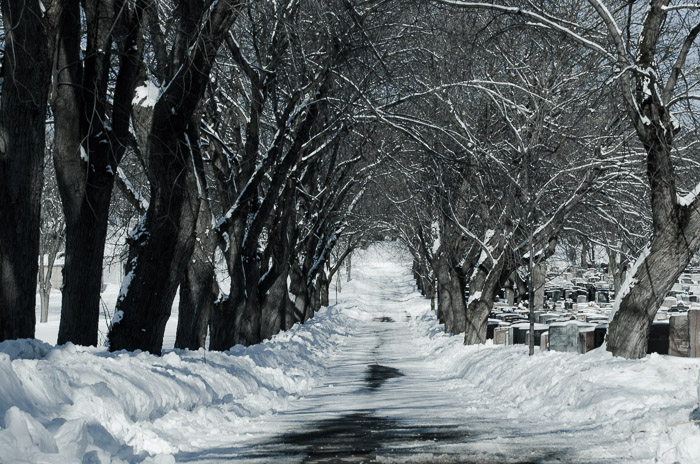 Tree lined lane at Notre Dame des Neiges cemetery
