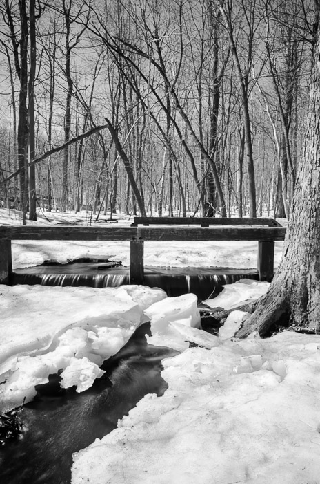Spring thaw on Mount Royal