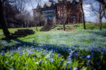 Bluebells at Lady Meredith house