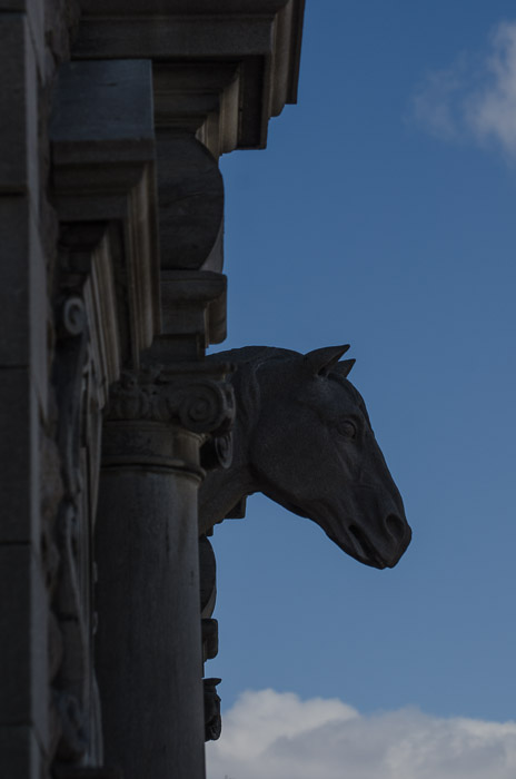 Horses head at the Ravenscrag stables