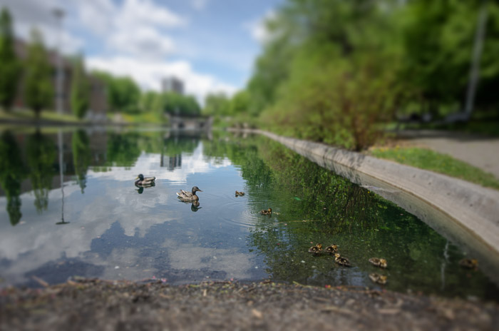 Some new habitants in Parc Lafontaine