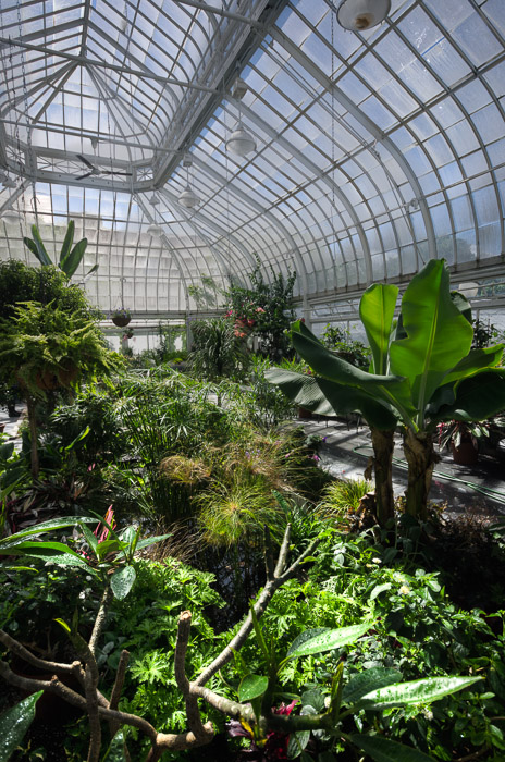Inside Westmount Greenhouse