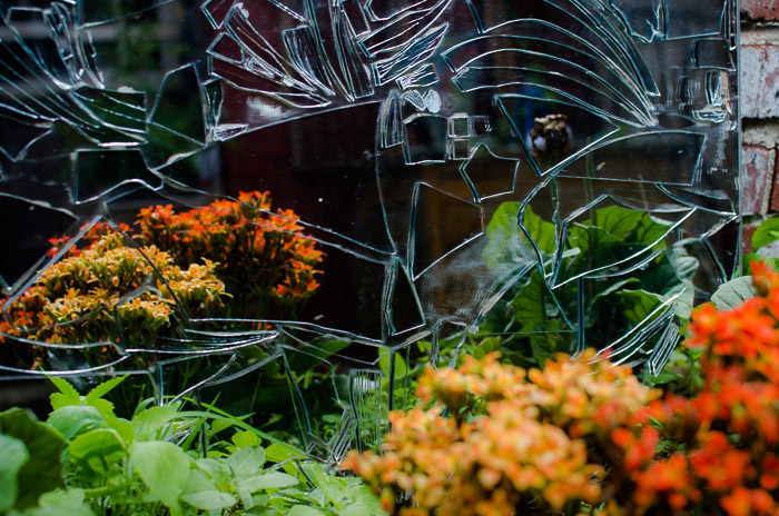 Flowers in a cracked mirror