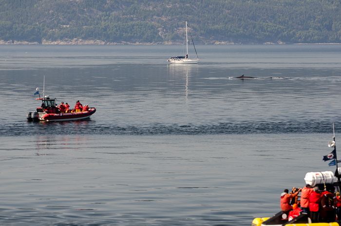 Whale watching on the Saint Lawrence