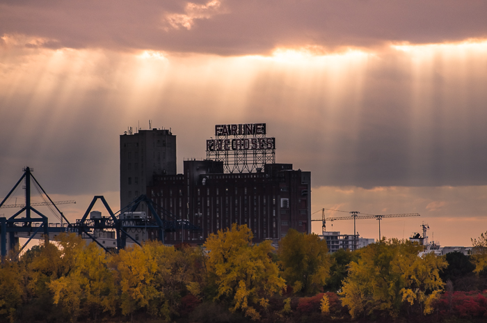 Farine Five Roses under sun rays