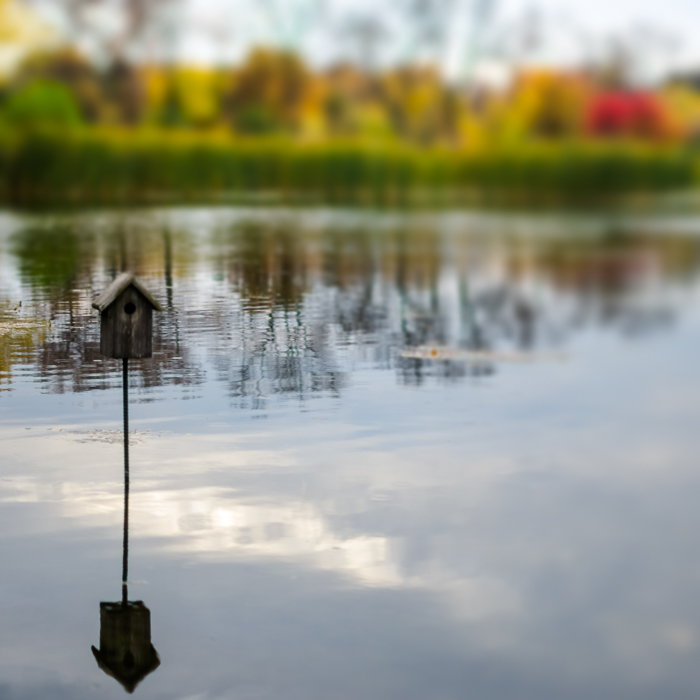 Bird house on the lake